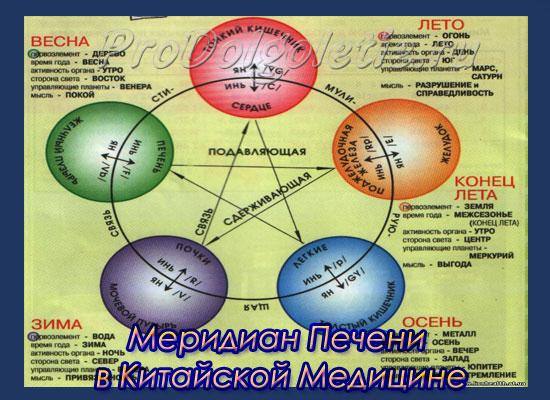 Меридиан печени в системе У-Син