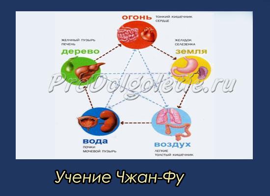 Учение Чжан фу о плотных и полых органах