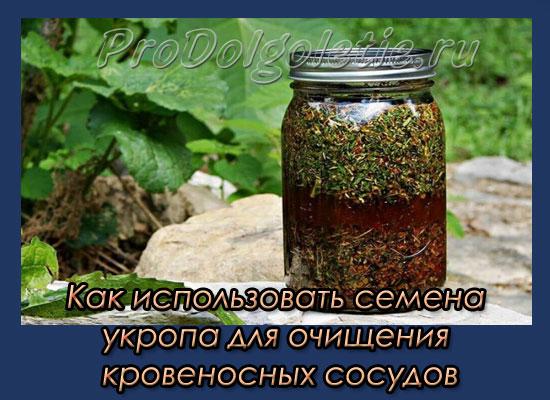 kak-ispolzovat-semena-ukropa-dlya-ochishcheniya-krovenosnykh-sosudov