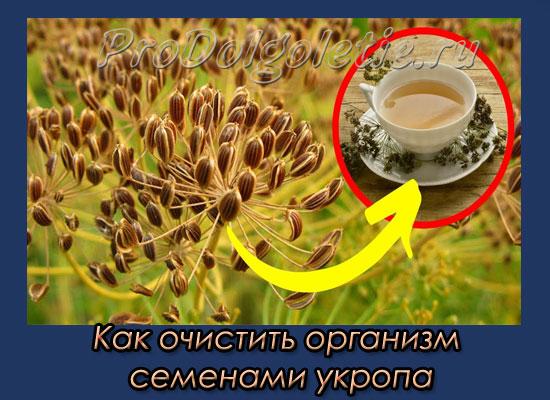 kak-ochistit-organizm-semenami-ukropa